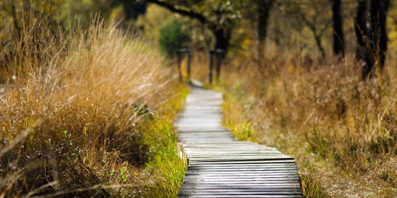 Cattus Island Nature Walks